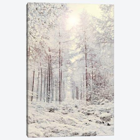 Crystal Forest Canvas Print #RBM15} by Ros Berryman Canvas Art Print