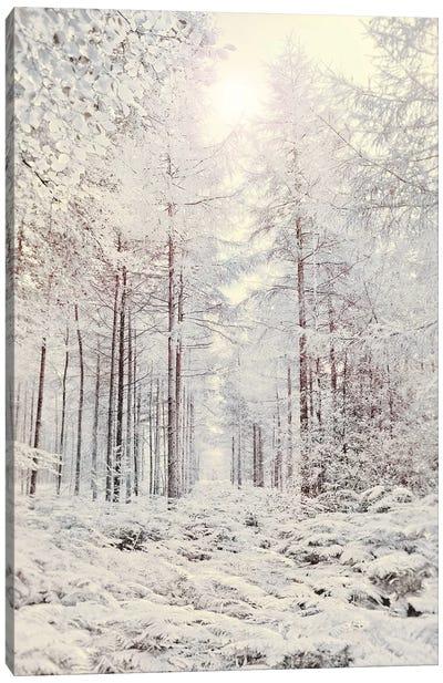 Crystal Forest Canvas Art Print