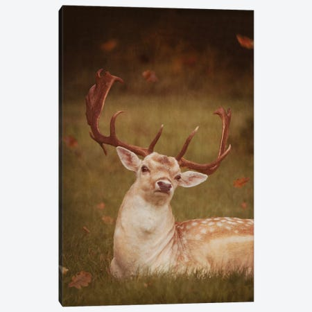 Deer With Autumn Leaves Canvas Print #RBM16} by Ros Berryman Canvas Art Print