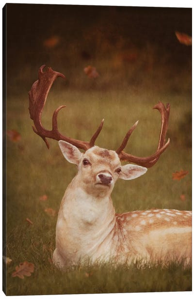 Deer With Autumn Leaves Canvas Art Print