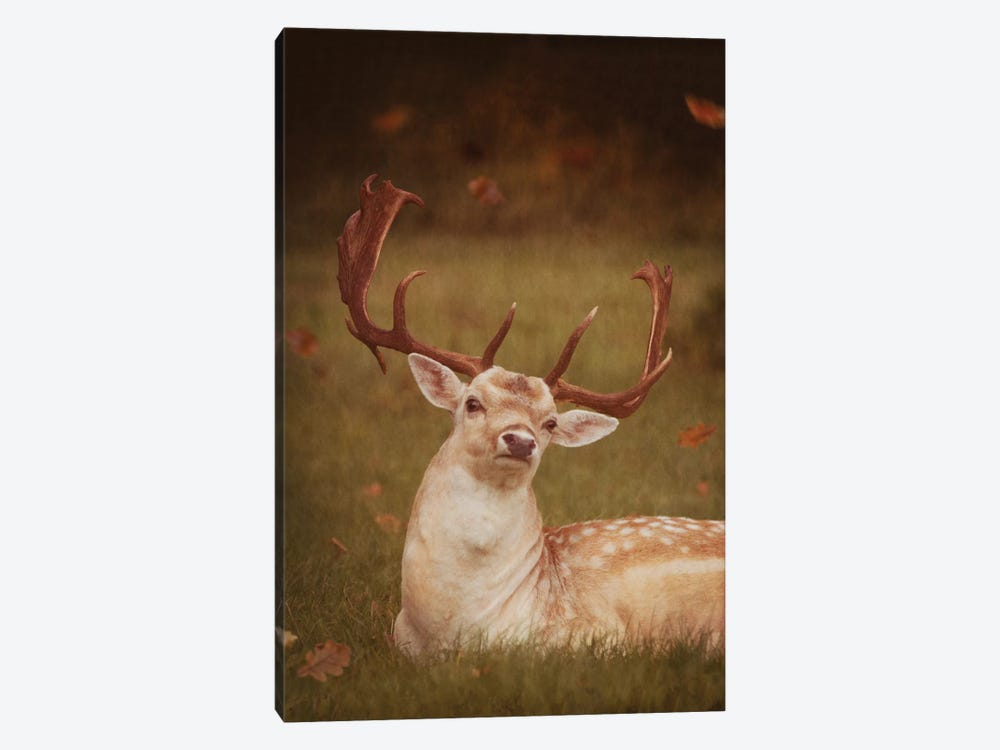 Deer With Autumn Leaves by Ros Berryman 1-piece Canvas Art Print