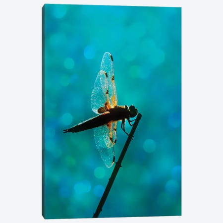 Dragonfly Canvas Print #RBM17} by Ros Berryman Canvas Art Print