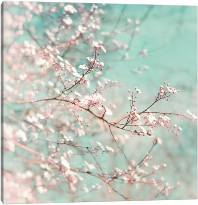 Early Spring Time Canvas Art Print