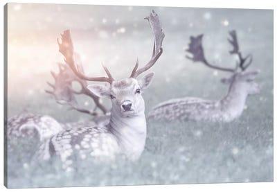 Fallow Deer Canvas Art Print