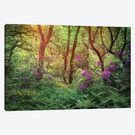 Forest Flowers Canvas Print #RBM27} by Ros Berryman Canvas Artwork