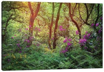 Forest Flowers Canvas Art Print
