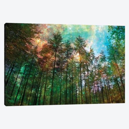 Forest Glow Canvas Print #RBM28} by Ros Berryman Art Print