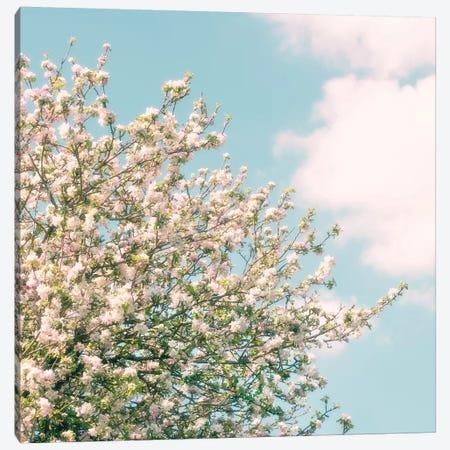 Apple Blossom Time Canvas Print #RBM2} by Ros Berryman Canvas Artwork