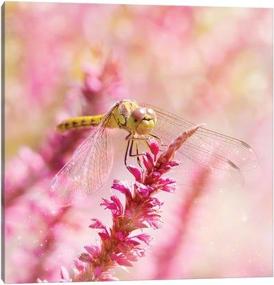 Happy Dragonfly Canvas Art Print