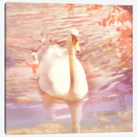 Mother Swan And Brood Canvas Print #RBM34} by Ros Berryman Canvas Art Print