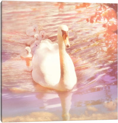 Mother Swan And Brood Canvas Art Print