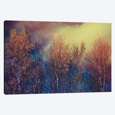 Natures Changing Moods Canvas Print #RBM35} by Ros Berryman Canvas Art Print