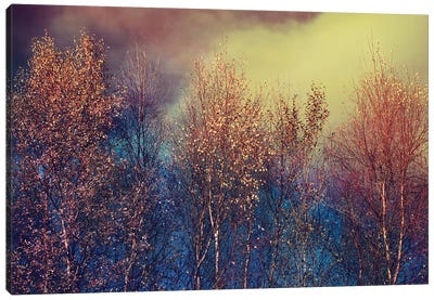 Natures Changing Moods Canvas Art Print