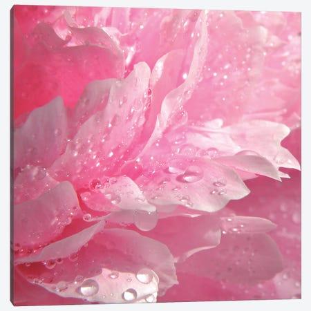 Peony With Raindrops Canvas Print #RBM44} by Ros Berryman Canvas Wall Art