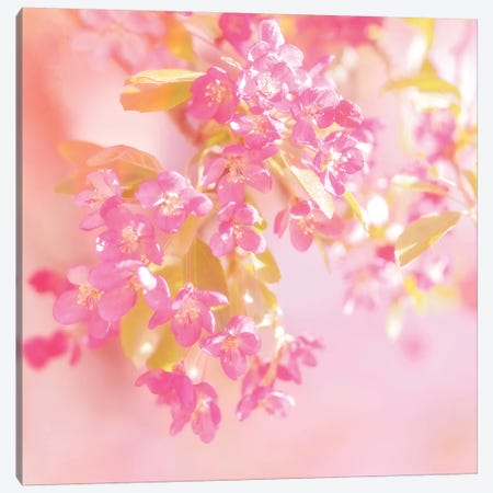 Pink Light Canvas Print #RBM46} by Ros Berryman Canvas Artwork