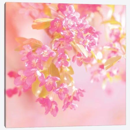 Pink Light Canvas Print #RBM46} by Ros Berryman Canvas Artwork