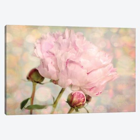 Pink Peony Canvas Print #RBM48} by Ros Berryman Art Print