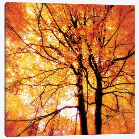 Autumn Glory Canvas Print #RBM4} by Ros Berryman Art Print