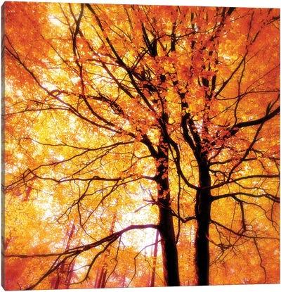 Autumn Glory Canvas Art Print