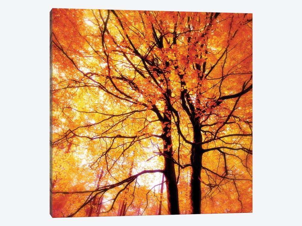 Autumn Glory by Ros Berryman 1-piece Canvas Art Print