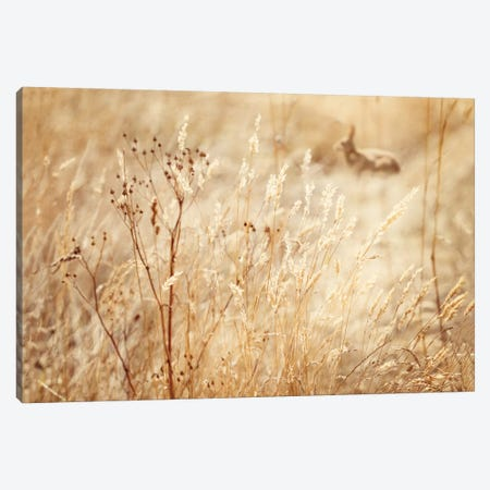 Rabbit In The Grass Canvas Print #RBM52} by Ros Berryman Canvas Wall Art