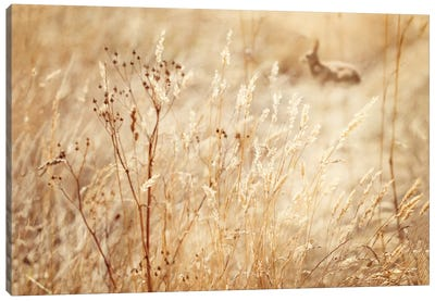Rabbit In The Grass Canvas Art Print