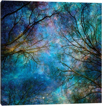 Reaching For The Stars Canvas Art Print