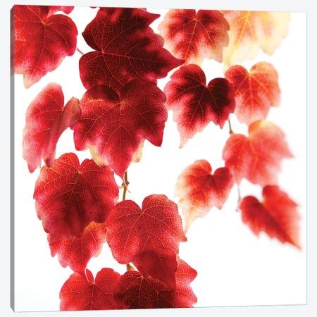Red Leaves 3-Piece Canvas #RBM54} by Ros Berryman Canvas Art Print