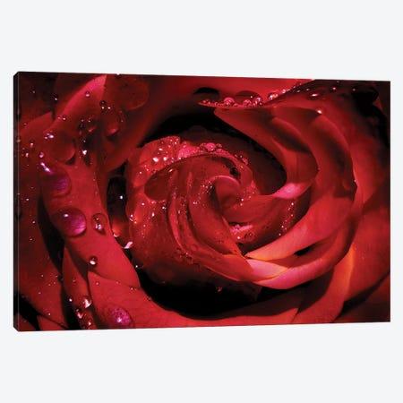 Red Rose 3-Piece Canvas #RBM55} by Ros Berryman Art Print