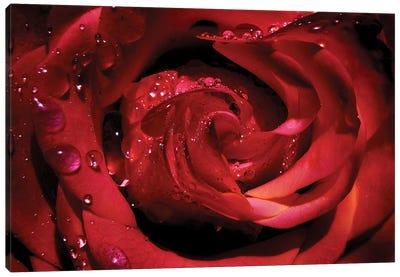 Red Rose Canvas Art Print