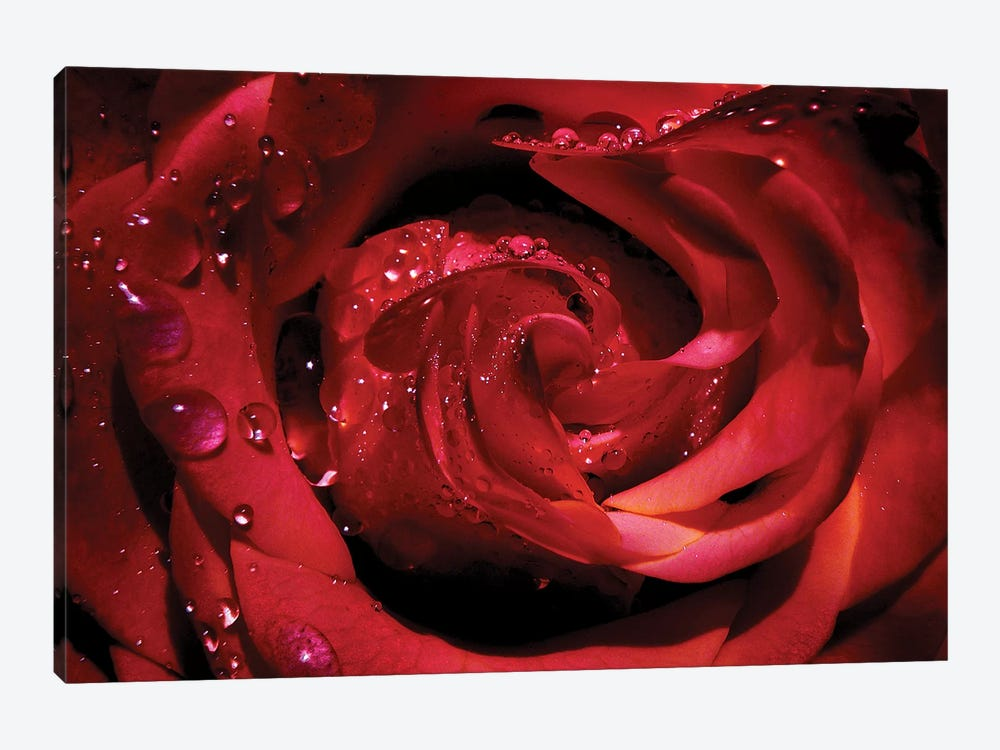 Red Rose by Ros Berryman 1-piece Canvas Artwork