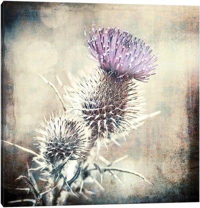 Scottish Thistle Canvas Art Print