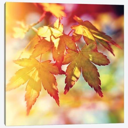 Autumn Sunshine 3-Piece Canvas #RBM5} by Ros Berryman Canvas Print
