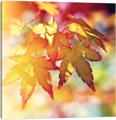 Autumn Sunshine Canvas Art Print