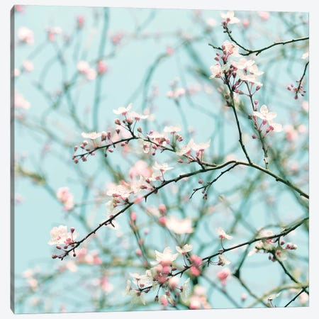 Spring Blossom Canvas Print #RBM62} by Ros Berryman Canvas Art Print