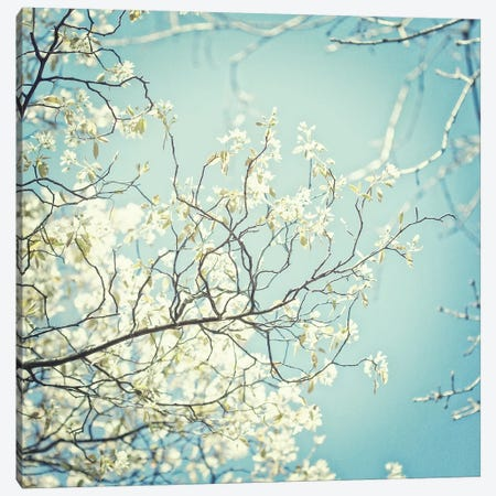 Spring Light Canvas Print #RBM63} by Ros Berryman Art Print