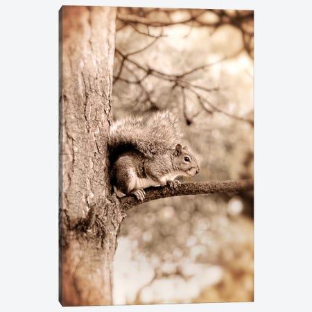 Squirrel Canvas Print #RBM64} by Ros Berryman Canvas Wall Art
