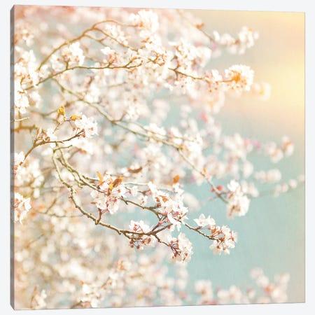 Sunlit Blossom Canvas Print #RBM67} by Ros Berryman Canvas Artwork
