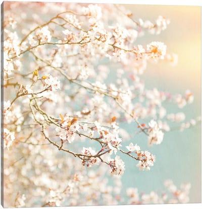 Sunlit Blossom Canvas Art Print