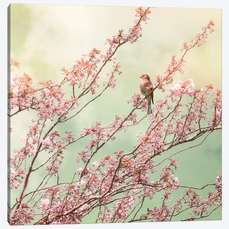 Bird With Cherry Blossom Canvas Print #RBM6} by Ros Berryman Canvas Art Print