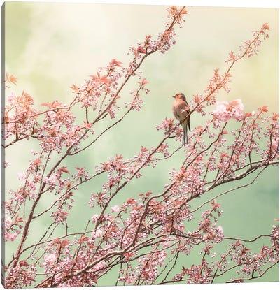 Bird With Cherry Blossom Canvas Art Print