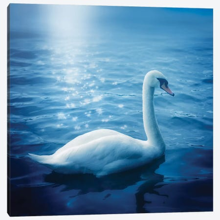 Swan And Starbursts Canvas Print #RBM70} by Ros Berryman Canvas Wall Art