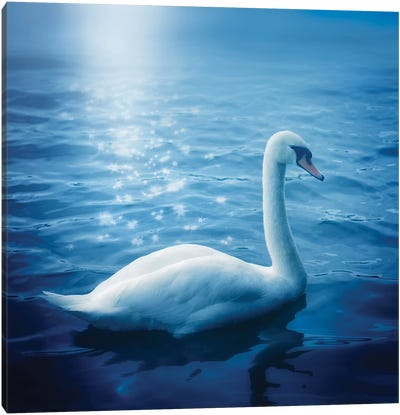 Swan And Starbursts Canvas Art Print