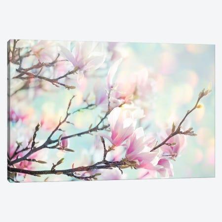 Magnolia Bokeh Canvas Print #RBM80} by Ros Berryman Canvas Art Print