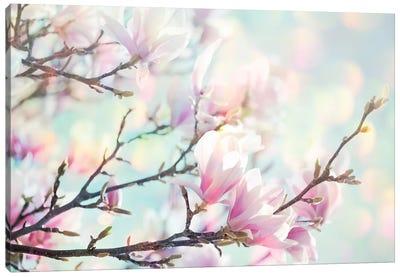 Magnolia Bokeh Canvas Art Print