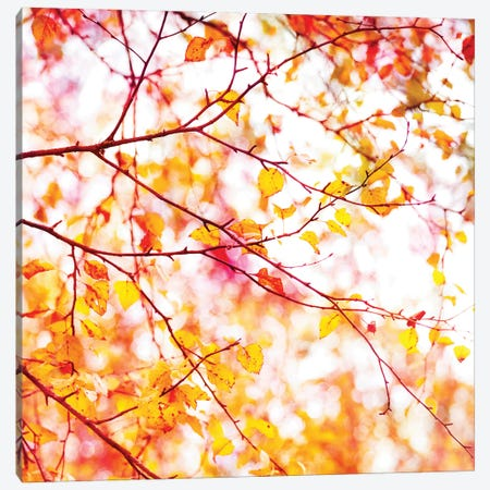 Autumn Colour Pop Canvas Print #RBM81} by Ros Berryman Canvas Print