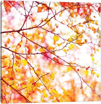 Autumn Colour Pop Canvas Art Print
