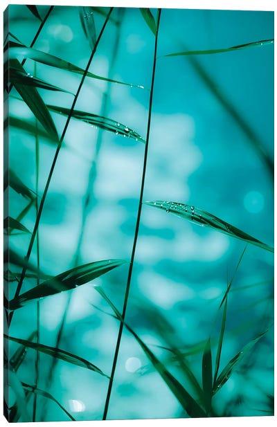 Raindrops On Reeds Canvas Art Print