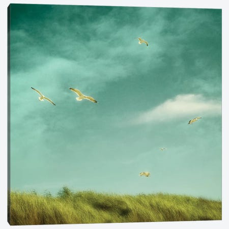 Catching The Breeze Canvas Print #RBM9} by Ros Berryman Canvas Wall Art