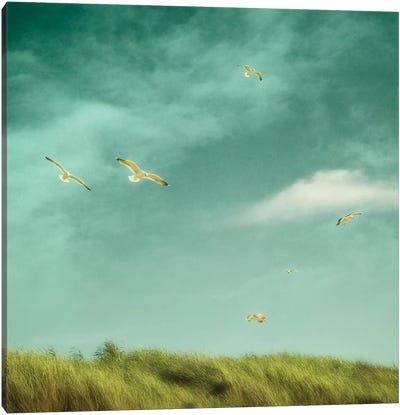 Catching The Breeze Canvas Art Print